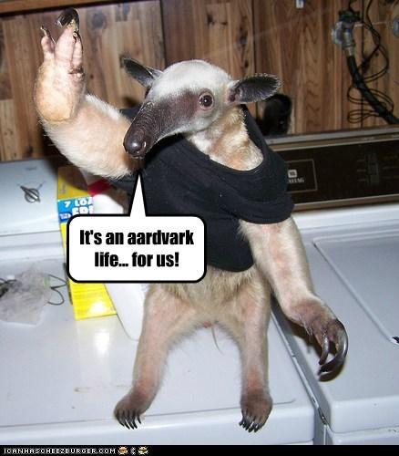 dancing aardvark song musical - 6648786176