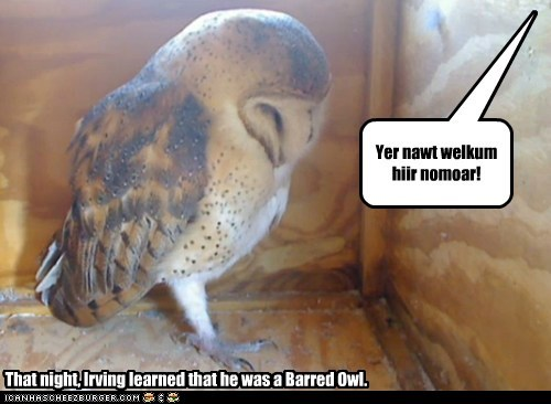 Yer nawt welkum hiir nomoar! That night, Irving learned that he was a Barred Owl.