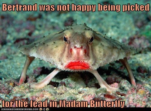 lead,lipstick,crab,Madam Butterfly,angry,not happy