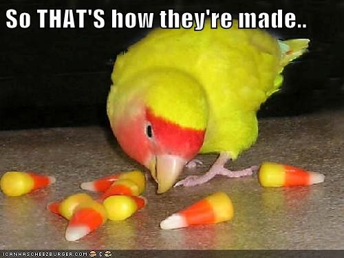 suspected,poop,parakeet,candy corn,made