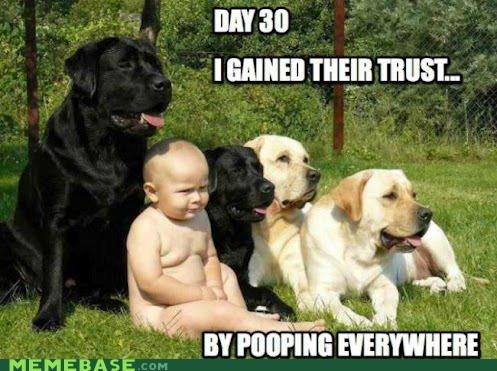baby dogs trust poop - 6649666816