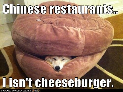 Cheezburger Image 6649751296