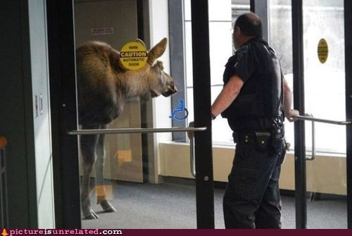 moose police get out eh