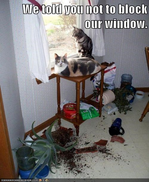 block window destroy plants push outside Cats captions categoryimage - 6649878528