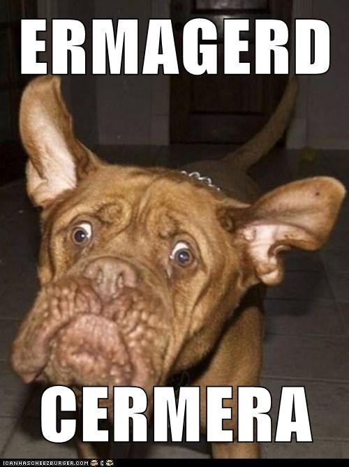 Ermahgerd goggie dogs pictures camera - 6649945856