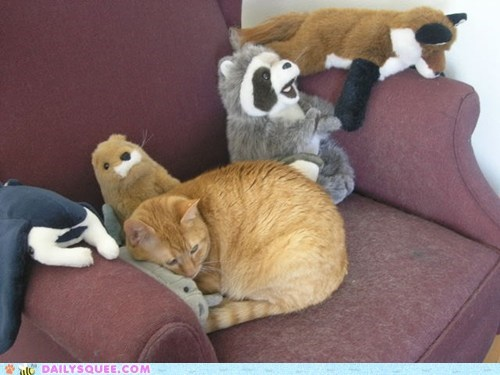 chair,cat,stuffed animals,reader squee,squee