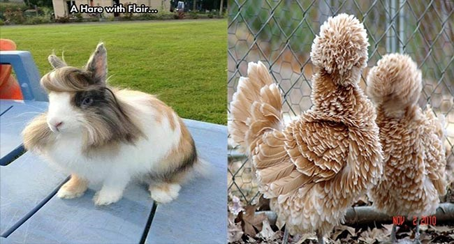 animals with flowing hair