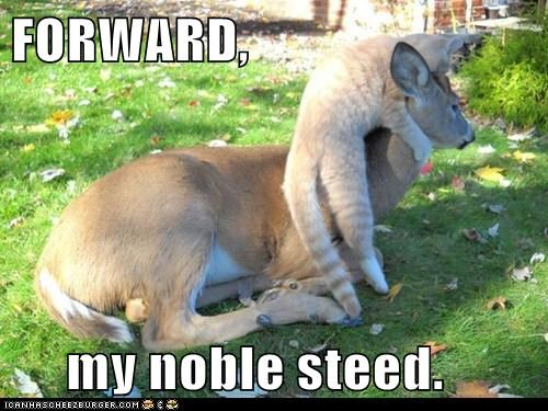 cat,forward,unimpressed,too big,deer,small,order,steed