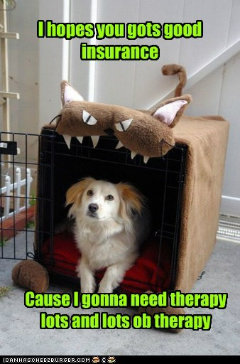 scary traumatized cat dogs therapy dog house what breed