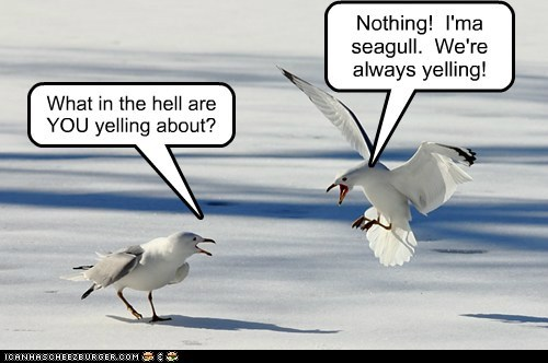 What in the hell are YOU yelling about? Nothing! I'ma seagull. We're always yelling!