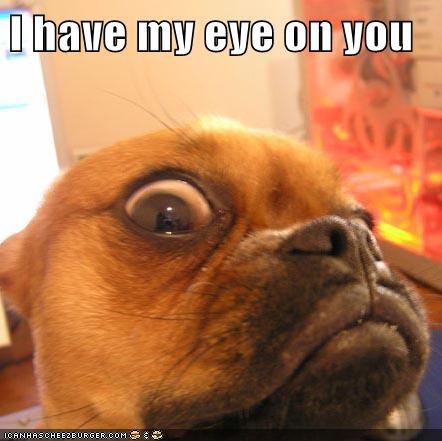 watching you dogs eyeball close up puggle - 6650767616