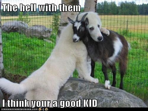 dogs,goat,kid,Interspecies Love,great pyrenees,hug