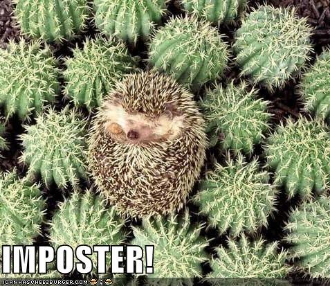cute hedgehog imposter lolcats lolhedgehogs
