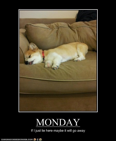 go away dogs couch corgi sleeping monday - 6651356416