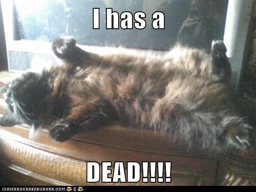 I has a  DEAD!!!!
