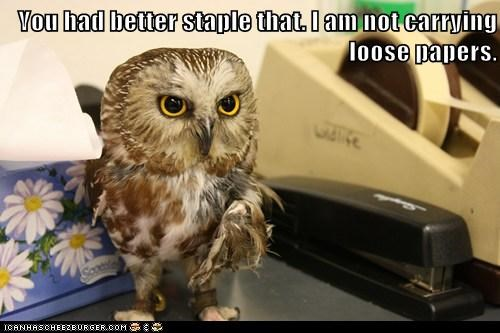 You had better staple that. I am not carrying loose papers.