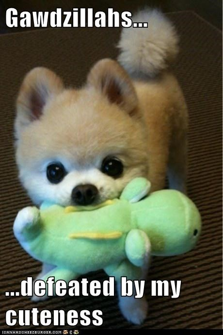 pomeranian,dogs,stuffed animal,godzilla,cute