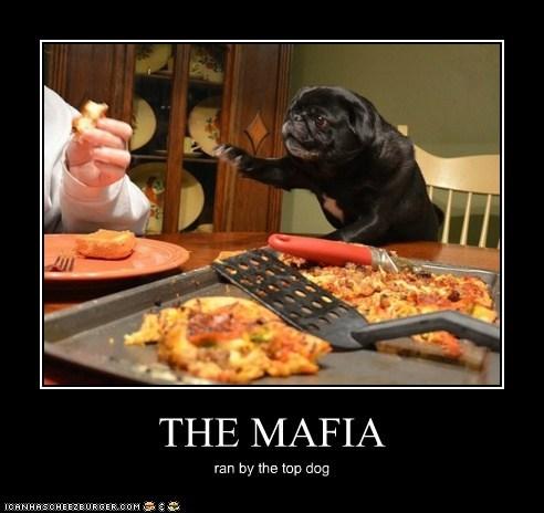 THE MAFIA ran by the top dog