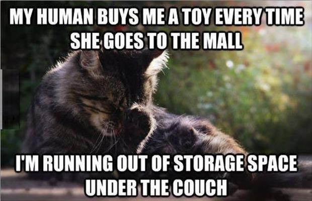 struggles of life as cats