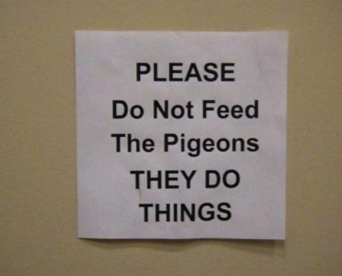 sign IRL pigeons - 6652556800