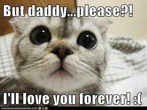 But Daddy Please I Ll Love You Forever Lolcats Lol Cat Memes Funny Cats Funny Cat Pictures With Words On Them Funny Pictures Lol Cat Memes Lol Cats