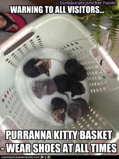 bureaucats snicker haven WARNING TO ALL VISITORS... PURRANNA KITTY BASKET - WEAR SHOES AT ALL TIMES