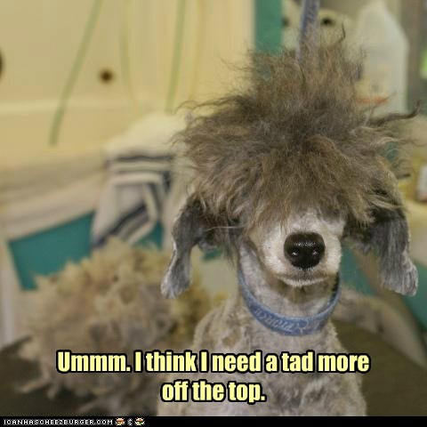 babershop cant-see dogs hairy hair cut what breed