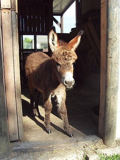 squee spree donkey winner poll results sunshine - 6652857856