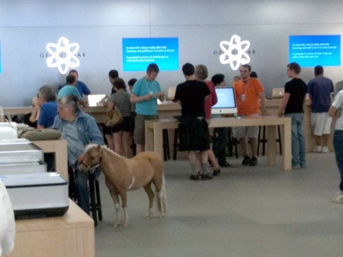 Miniature Horse,mini horse,pygmy horse,horse,apple store,apple,iphone 5,ios 6