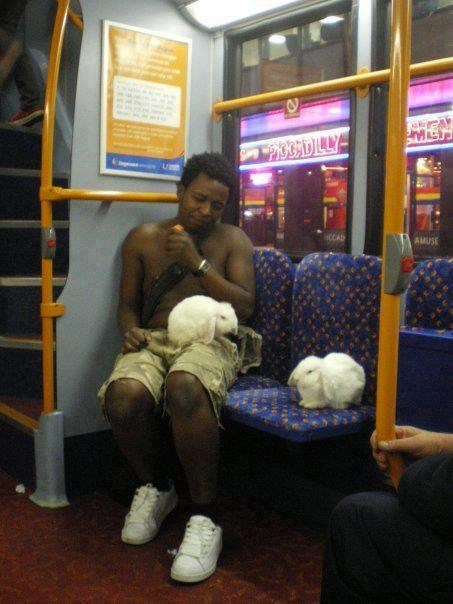 bunnies,bus,public transportation,what,weird