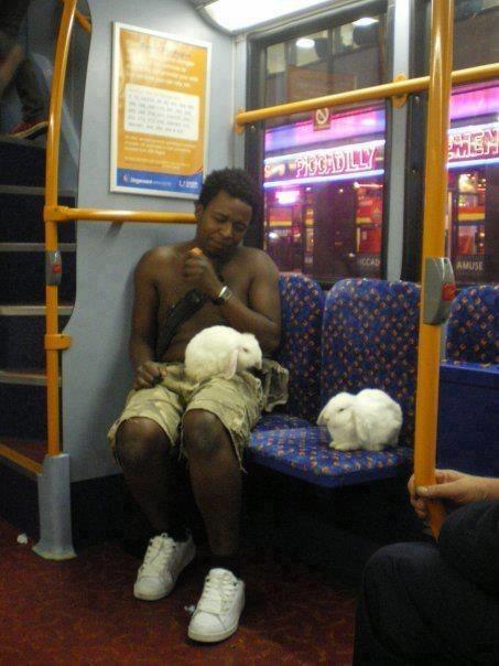 bunnies bus public transportation what weird