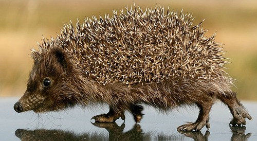 spine high-def close up hedgehog prickle squee - 6653076736