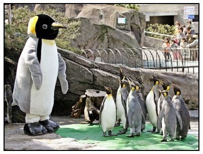 costume,penguins,aquarium,impostor,zoo keeper,suit,squee