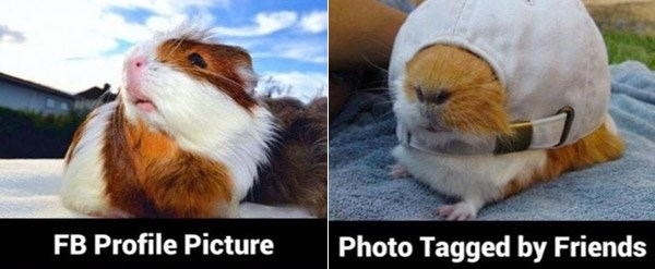 profile pic tagged animals - 6653189