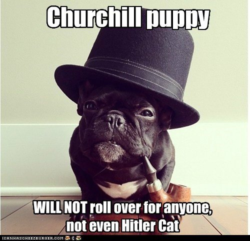 Churchill puppy WILL NOT roll over for anyone, not even Hitler Cat