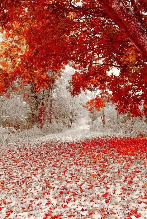 snow fall leaves seasons - 6653255424
