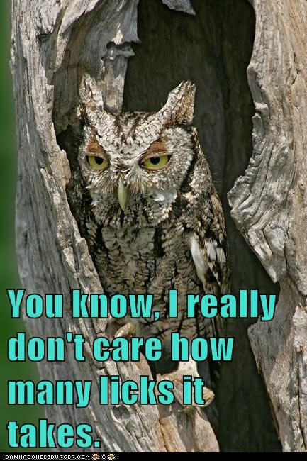 over it dont-care unimpressed tootsie pop Owl how many licks - 6653371904