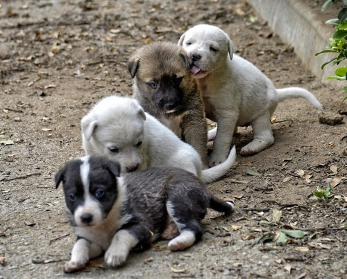 cyoot puppy ob teh day what breed backyard dirt playing puppies dogs - 6653494784
