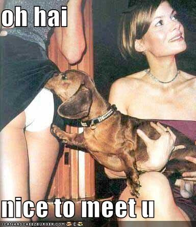 dachshund - 665368832