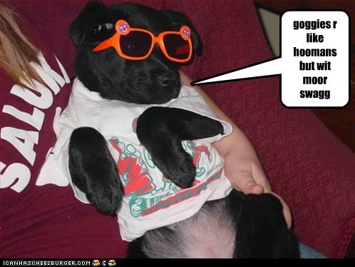 cool,dogs,sunglasses,swag,tshirt,what breed