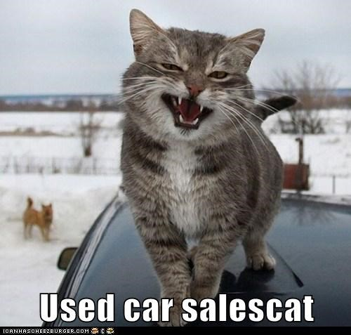 car salesman,used car,salesman,sleezy,creepy,sales,Cats,captions