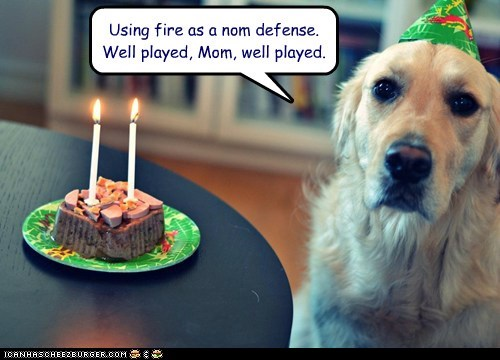 cake,dogs,birthday,fire,candle,defense,noms,golden retriever