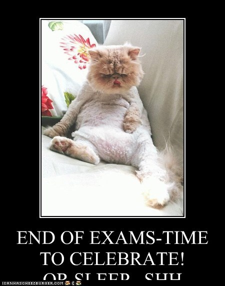 Cheezburger Image 6654092544