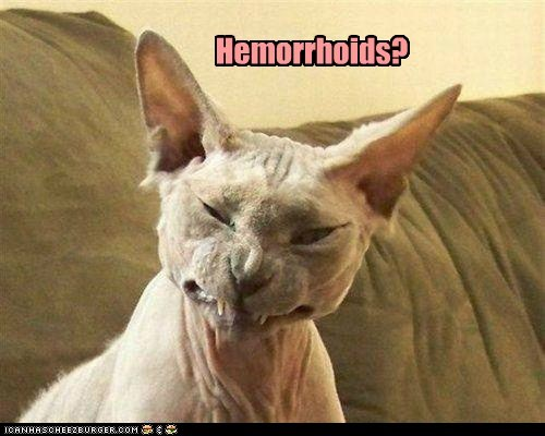 hemorroid,pain,discomfort,health,gross,butt,Cats,captions