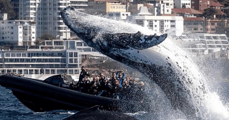 australia whale tourists surprise - 6654213
