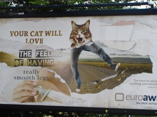 cat,sign,billboard