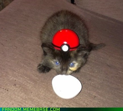 Pokémon,cat,cute,pokeball