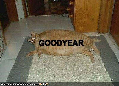 big boned blimp diet fat Fluffy goodyear lolcats - 665472256