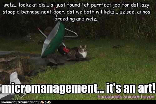welz... lookz at dis... ai just found teh purrfect job for dat lazy stoopid bernese next door, dat we both wil liekz... uz see, ai nos breeding and welz.. micromanagement... it's an art! bureaucats snicker haven