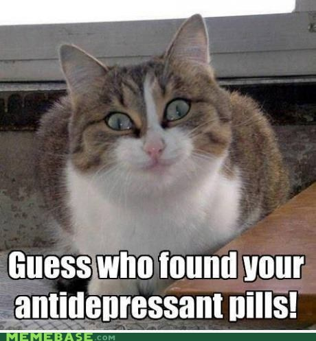 cat,antidepressant,pills,cats tho